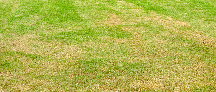 Fix all thin or bare areas in your lawn in septembre