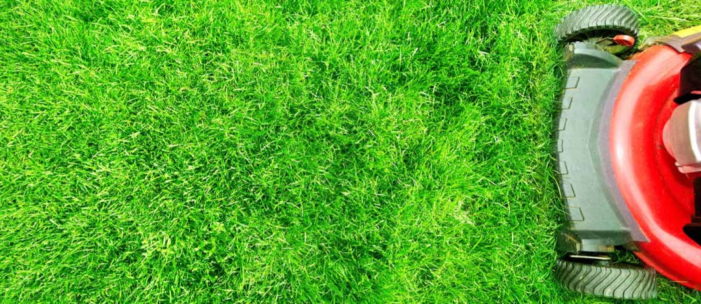 Lawn mower care for the perfect lawn
