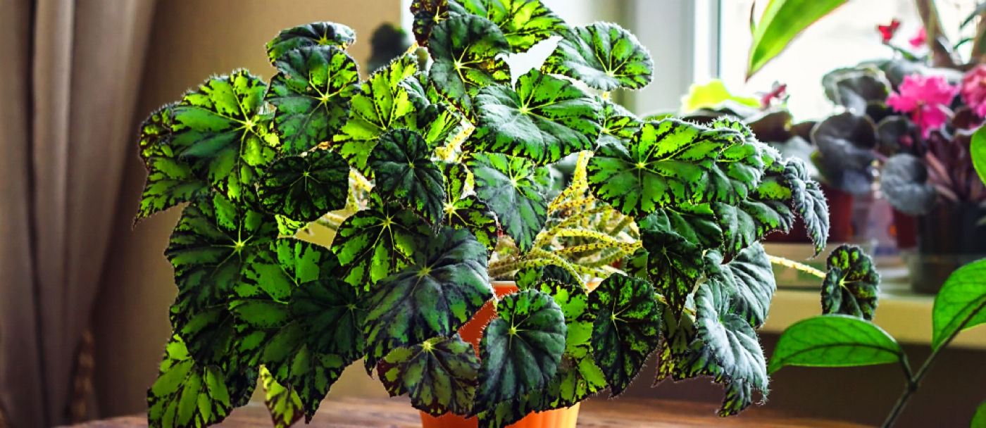 How to feed houseplants