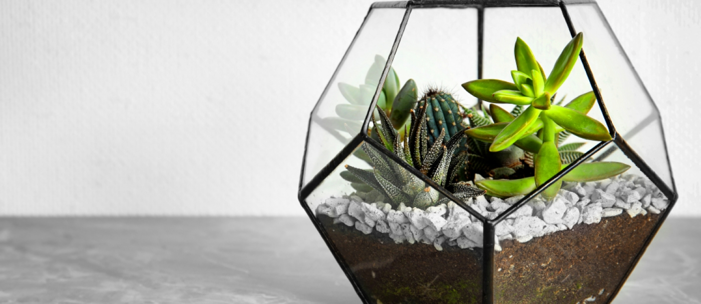 What you need to know about making a terrarium
