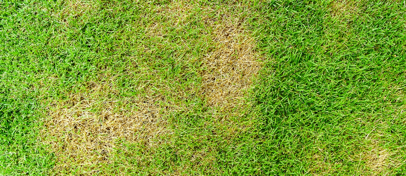 How to repair or fix patchy lawn
