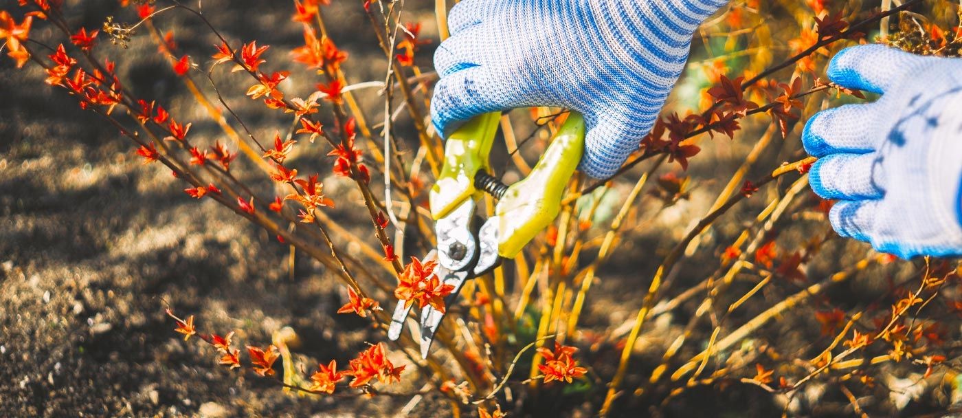 Late winter/early spring is an excellent time to refresh your plants by pruning
